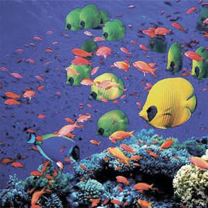 Подводный мир Иордании
