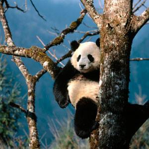 Уникальная природа Китая