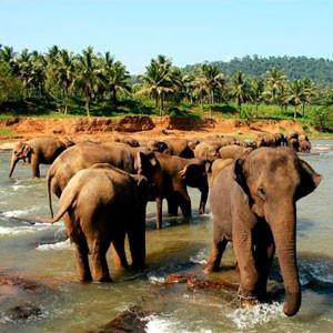 Животный мир Шри-Ланки
