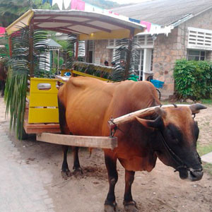 Транспорт Сейшельских островов